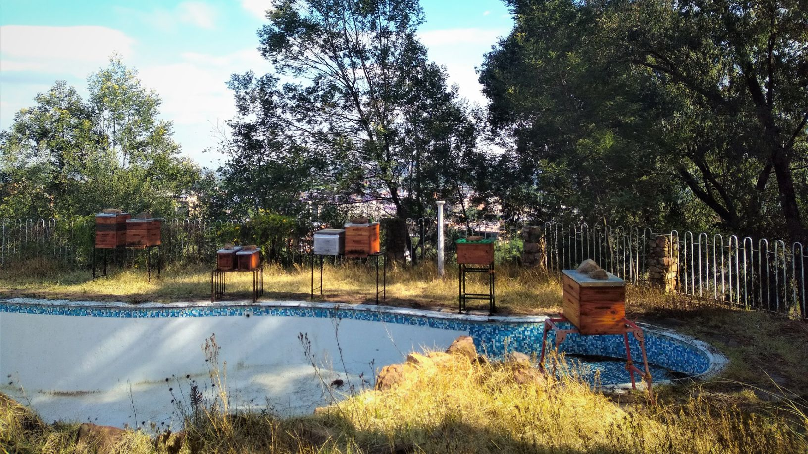 Urban Beekeeping Site Houghton JHB