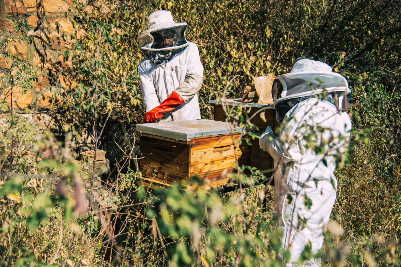 How I Be(e)came a BeeKeeper!