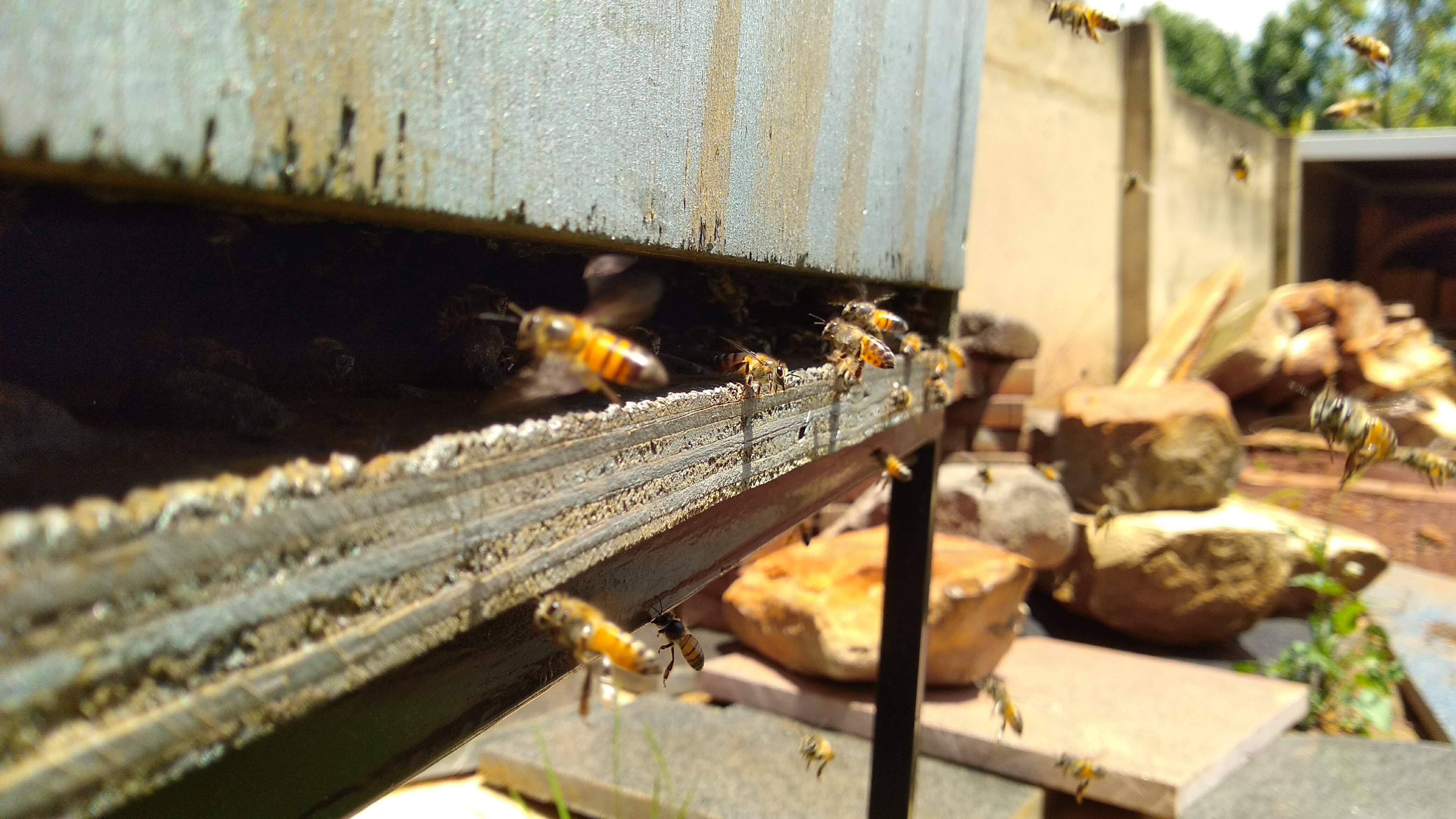 Urban Beekeeping Site Kensington JHB